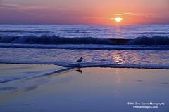 Sunrise and egret (Krnr Pics) Tags: beach sunrise crescentbeach staugustine krnrpics kernerpics