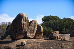 Maasai used to live within this rock outcropping (3scapePhotos) Tags: africa kopjes maasai tanzania ancient continent kopje live massai outcrop outcropping rock safari serengeti tribe within