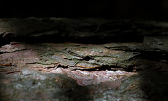 """Crocodile in the tree bark"" (-Mark Bean-) Tags: wood light plant tree nature face animal forest woodland mouth pareidolia spring woods branch dragon dinosaur natural grove head timber gator reptile snake teeth low alligator biting lizard bark jungle iguana swamp twig crocodile jaws trunk bite croc beast marsh pulp mead softwood shrub predator seedling luton hardwood komodo thicket wooded sapling wigmore caman"