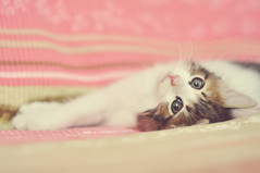 I love cats because I enjoy my home; and little by little, they become its visible soul (L e t i) Tags: matisse