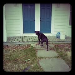 A Dog Named Lomo (coldwar_bonnet) Tags: lomofake android samsunggalaxys2 onemanwithacamera