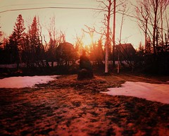 down on my mind (~Lauren Parker) Tags: winter sunset summer snow tree grass project hair golden spring down days flip hour mind stump 365 365days