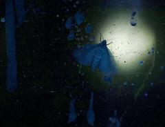 A Night Image for jiepe-a (hedbavny) Tags: blue music orange macro green nature museum night licht nacht natur spuren manipulation naturalhistory innen bach gelb inside grün blau musik soir makro naturalhistorymuseum beehive baum glas museumofnaturalhistory nhm vitrine intruder naturhistorischesmuseum honig kunstlicht wachs bearbeitung johannsebastianbach youtube exponat bienenstock bienenwachs arvopärt naturhistorischesmuseumwien wienvienna zucht maigrün österreichaustria pärt unbewohnt eindringling bienenzucht züchten ausgehöhlt bienenwaben bienennest ausstellungsstück paert honiggelb museumofnaturalhistoryvienna naturhistorischesmuseumderstadtwien arvopaert kamerabienenstock wennbachbienengezüchtethätte