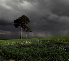 Dopo il temporale - After the storm (da.geli) Tags: flowers trees sky italy white storm green grass clouds landscape afterthestorm pines umbria dopoiltemporale abigfave mygearandme mygearandmepremium mygearandmebronze mygearandmesilver mygearandmegold