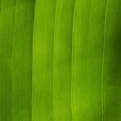 Leaf lines (Deb Jones1) Tags: macro green nature beauty leaves canon garden botanical outdoors flora patterns flickrduel flickrawards parkleaf debjones1
