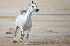 (HANI AL MAWASH) Tags: art animal photo al kuwait hani  1color artphoto      animalkingdomelite mywinners  aplusphoto kuwaitphoto   almawash almwash kuwaitartphoto kuwaitart  mawash