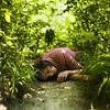 between bushes and grass (laura zalenga) Tags: woman tree green nature girl face square bush hand bokeh path peaceful ground jacket laying ©laurazalenga