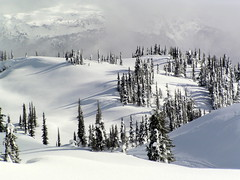 SPRINGTIME IN THE HIGH COUNTRY.  REVELSTOKE,  BC. (vermillion$baby) Tags: bcmountain revelstoke tree snow snowmobiling treestree white winter fun cold ice revelstokef trees treef