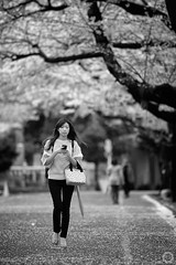 Walking through Yanaka's Cherry Blossom (Alfie | Japanorama) Tags: street japan cherry tokyo nikon sakura yanaka d700