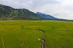 Go Green (andrewpug) Tags: blue mountain snow mountains green meadow peak jackson pasture wyoming jacksonhole