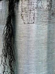 Rat tail (silverfuture) Tags: streetlight grain pole string hanging lightpost frayed unraveling unraveled