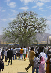Crowd In Front Of Baobab At Festival Of Mariam Dearit, Keren, Eritrea (Eric Lafforgue) Tags: africa color colour tree vertical outdoors photography day religion crowd celebration trunk pilgrim keren baobab eritrea hornofafrica eastafrica eritrean bilen realpeople holymary eritreo charen img0792 colorpicture erytrea largegroupofpeople eritreia africanethnicity italiancolony  cheren blackvirgin ertra    eritre eritreja eritria colourpicture  rythre africaorientaleitaliana     eritre eritrja  eritreya  erythraa erytreja     festivalofmariamdearit italiancolonialempire ansebaregion