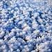 Frost Flowers