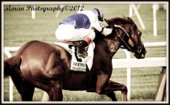 Shackleford (EASY GOER) Tags: park horses ny sports racetrack canon action belmont tracks competition racing 7d athletes races equine thoroughbreds equines metmile metropolitanmile