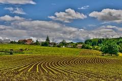 Bellmund s/Bienne (jd.echenard) Tags: agriculture hdr seeland bellmund nikon2035mmf28d paysagesuisse switzerlandlandscape schweizerlandschaft bellmundprèsbienne bellmundsbienne