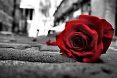 Red rose (Sir Mashington the 27th) Tags: street new old city red blackandwhite bw flower color colour rose wales alley rocks day cityscape bokeh walk 5 sony south sydney rocky australia cobblestone nsw editing selective nex