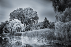 Tree's (Tvr-photography) Tags: longexposure holland netherlands t exposure fotografie 110 nederland hague filter infrared haag rood ndfilter nd110