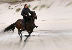 Fury (patrick_milan) Tags: people horse woman beach girl cheval women brittany femme bretagne cavalier fille plage finistre saintpabu