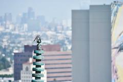 View (Carrie McGann) Tags: bird pagoda losangeles interesting nikon hollywood yamashiro mockingbird 050316