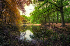 When nature doesn't know anymore.. (Mini-UE || Mini-Photography) Tags: nature autumn summer spring lake river park land van ooit kleur color colors colorful composition compo natuur light hdr fotografie photography photograph mini miniphotography michel nicolaes ngc natural