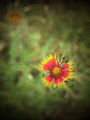 Snappy (drewweinstein34) Tags: life flowers flower color art nature flickr power artistic realistic photopainting