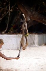 the acrobat (NoahSud) Tags: noahsud