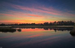 Sunset in Kampina (Jessie van Weert) Tags: trees light sunset sky plants cloud sun plant holland reflection green nature water netherlands beautiful field sunshine yellow wonderful landscape photography licht spring nice interesting zonsondergang nikon warm flickr groen fotografie dof looking view purple dynamic outdoor gorgeous extreme ngc wide adorable natuur atmosphere wideangle depthoffield explore mysterious uitzicht lucht fabulous lente magical 1020 depth fens vennen brabant impressive paars extreem natuurmonumenten kampina reflectie boxtel natuurgebied bijzonder staatsbosbeheer dynamisch d3100