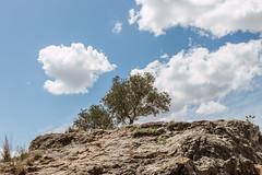 67Jovi-20160529-0082.jpg (67JOVI) Tags: valencia olivo albufera muntanyetadelsants