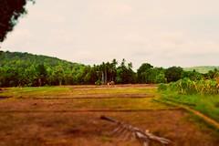 Beautiful Landscape (Patiljayendra) Tags: landscape nature farm photo wallpaper beautiful greenplant green konkan openplace ecofriendly environment