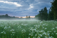 Summer Night (laurilehtophotography) Tags: hdr summer night clouds sunlight grass nature scene trees fog wet rain suomi finland saarijrvi nikon d3100 nikkor 1755mm f28g photomatix nikonphotography naturephotography