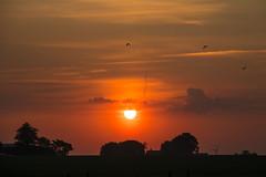 At Sunrise (Infomastern) Tags: morning sky cloud bird sunrise landscape countryside soluppgng landskap fgel sdersltt landsbygd