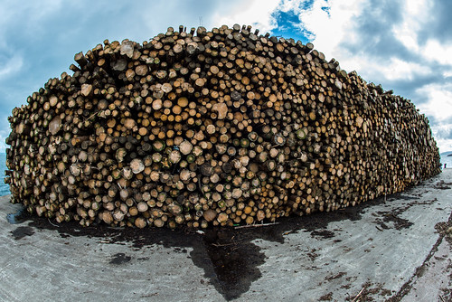 Log pile in colour....