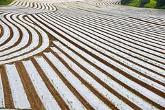 Lignes (JDAMI) Tags: france nikon culture plantation agriculture 80 champ lignes picardie semis somme 70300 d600 courbes droites forage herleville sinuosits