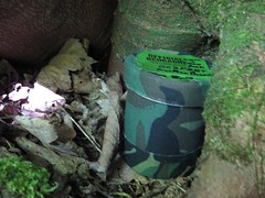 1583 Geocache at Cym-y-Glo (Andy panomaniacanonymous) Tags: 20160602 ccc container cwmyglo geocache ggg gz treetrunk ttt