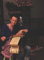 emily (Lucienne Champ) Tags: music woman flower bird donna nikon play homeless musica 18125mm d5000