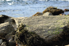 (Jelena1) Tags: water rock ro canon river moss agua rocks eau wasser serbia rivire balkans fluss vatten roca voda roches srbija stene gestein reka drina flod bergart bryophyta riverdrina mahovina canonefs1855mmf3556is laubmoose canon600d bladmossor canoneos600d rekadrina