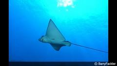 2012-04-25-194411 (ColKorn) Tags: animals seaocean