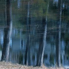 Reflet des pins devant la Maison de la Lune...!!! (Denis Collette...!!!) Tags: lake reflection reflet montauban notredamedemontauban img8902 deniscollette lacducastor mékinac maisondelalune