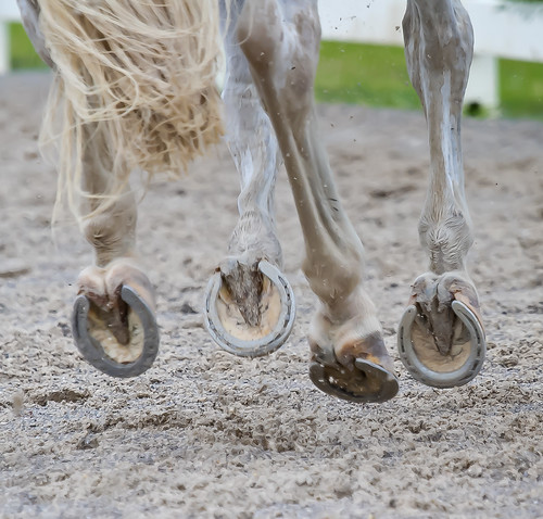 improve your riding, thistle Ridge Skill Builders, Laura Kelland-May, horse riding, horse training Ottawa, Horse training Ontario,