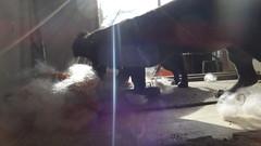 DSC00359 (Primespot Photography) Tags: dog canada dogs puppy puppies bc britishcolumbia dachshund puppys doxie dashchund fraservalley lowermainland weinerdog chihuahau chiweenie dashie