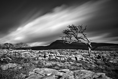 Twistleton Scar Tree and Ingleborough (John Ormerod) Tags: longexposure light shadow blackandwhite cloud motion tree mono blog flickr wind monochromatic bestof2012