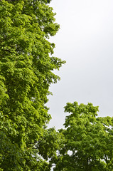 Clearing Out (Copious Photography) Tags: sky cloud sun plant tree green nature wet rain weather out spring sunny growth leafy clearing