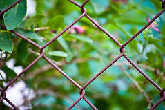 Fency (Oreo Cakester) Tags: amanda green fence rusty 365 alexander 365orless oreocakester
