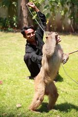 Monkey man of Muzaffarabad, teaching his Rhesus Macaque monkey to salute, AJK, Kashmir (Paul Snook) Tags: kashmir ajk muzaffarabad rhesusmacaquemonkey