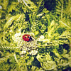 Ladybug (LiesBaas) Tags: plant bug garden insect spots ladybug tuin 2012 iphone coleoptera coccinellidae lieveheersbeestje beestje coccinellaseptempunctata stippen stippels iphotography iphonography liesbaas ladybugbyliesbaas