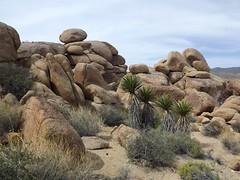 boulders (h willome) Tags: california desert joshuatree wildflowers joshuatreenationalpark 2016 cottonwoodsprings