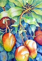 Mango tree, by Ademar - DSC02950 (Dona Mincia) Tags: food tree art fruit watercolor painting paper leaf branch arte comida manga fruta alimento study mango rvore pintura galho aquarela natuure golha