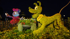 Minnie and Pluto at Epcot Flower and Garden (Curtis Lannom) Tags: unitedstates florida disney baylake