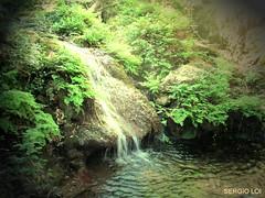 CAPELVENERE (SergioLoi) Tags: sardegna italy verde green foglie italia sardinia fiume natura bosco barbagia esterzili