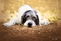 Coc available for adoption (alessandrafavetto) Tags: dog pet pets color dogs outdoors adopt adoption dogphotography hori petphotography dogportrait petphotographer dogphotographer